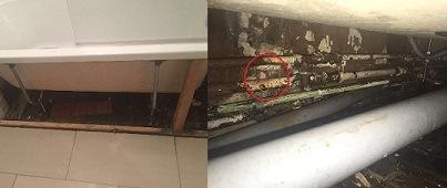 Water leak detection and repair